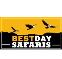 Bestday Safari : Brand Short Description Type Here.